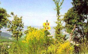 Monte Malbe