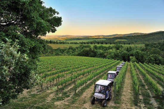 monte-vibiano-vineyard
