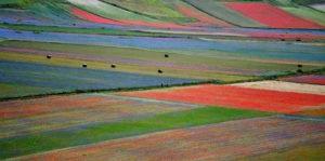 La splendida fioritura di Castelluccio di Norcia