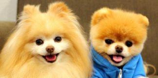 Tanti cani domestici in Umbria