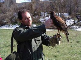 falconeria Sibillini
