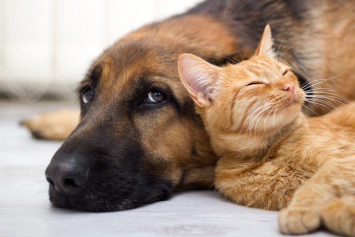 veterinario gratis per cani e gatti adottati