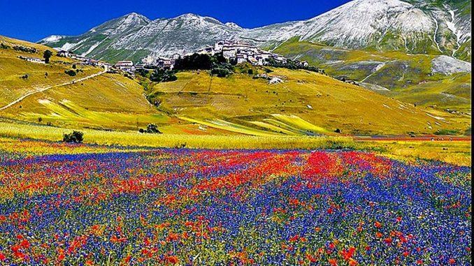 fioritura di Castelluccio di Norcia
