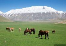 Cavalli sul Pian Grande di Castelluccio di Norcia