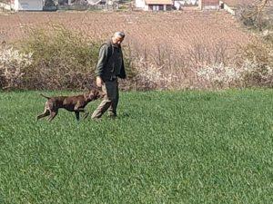 I cani di Mignini vincono in Serbia