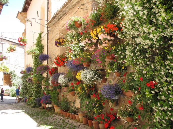 Spello la città dei fiori