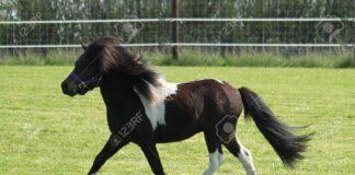 Pony nelle scuole